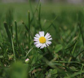 fiore in un campo