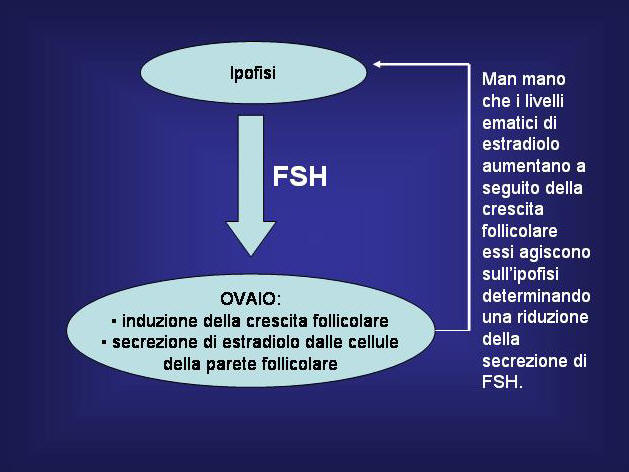 FSH.jpg