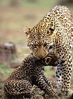 Come cresce una mamma: da felino a gabbiano | Noi Mamme