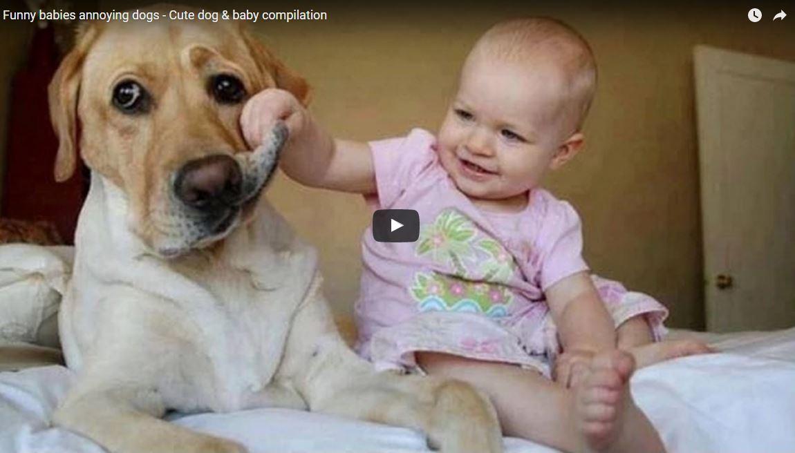 Video divertenti: bambini vs cani