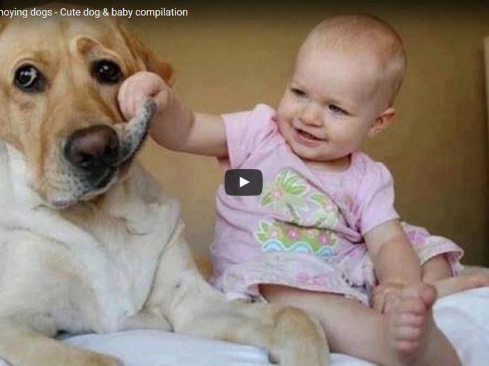 Video divertenti: bambini vs cani   Noi Mamme 2