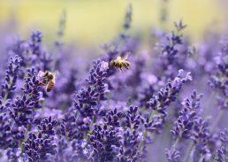 terapie naturali contro l'acne