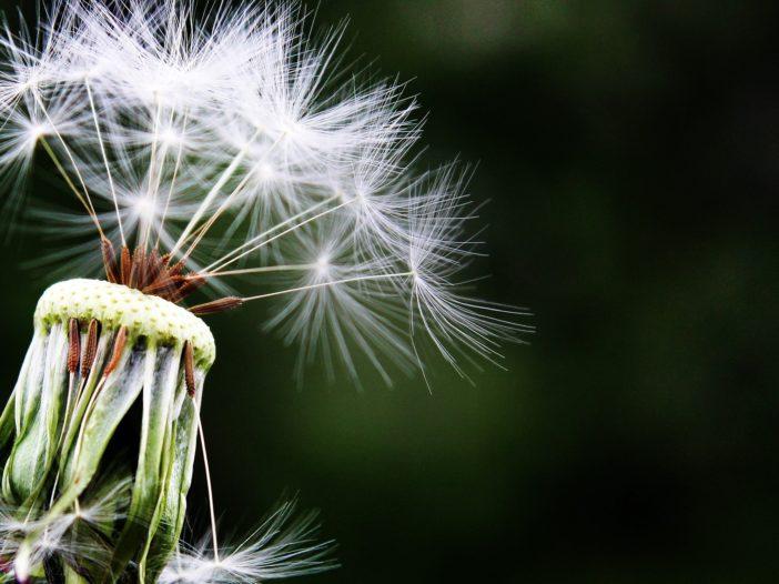 Arriva la Primavera: per molti Italiani inizia l'incubo allergia   Noi Mamme 4