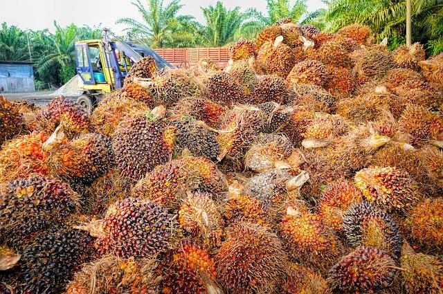 Olio di palma: cos'è e fa male davvero?