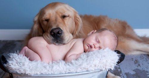 Animali domestici e neonati