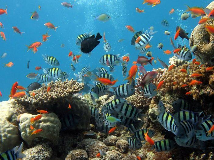 Passione acquario, hobby ma anche idea di arredamento | Noi Mamme