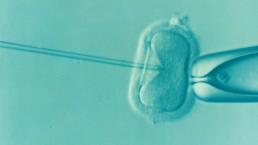 Detrazioni per procreazione medicalmente assistita