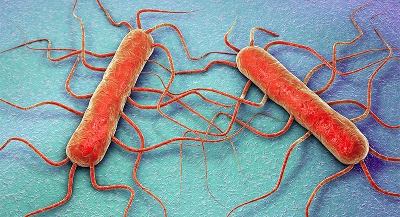 Listeriosi: cos'è, quali alimenti sono a rischio e come prevenirla