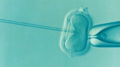 Detrazioni per procreazione medicalmente assistita   Noi Mamme