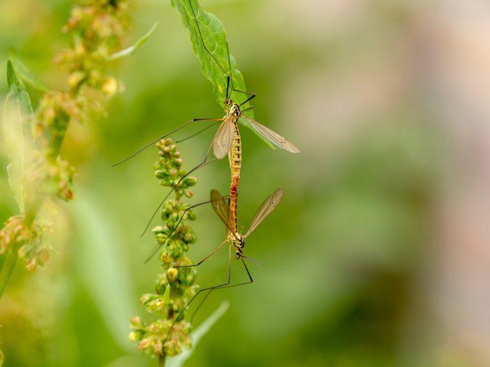 Arrivano le zanzare | Noi Mamme