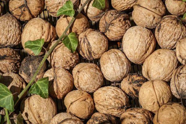 Frutta secca anche per dimagrire, una buona e sana abitudine