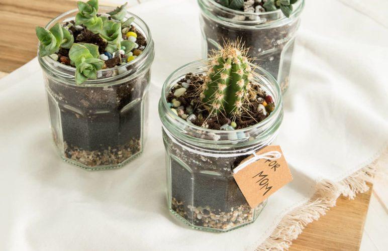 Vasetti marmellata con piante grasse