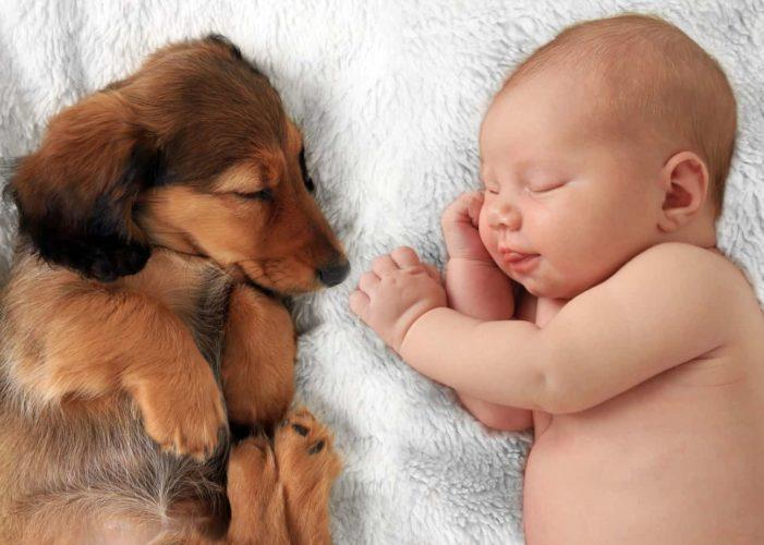 Cani e neonati