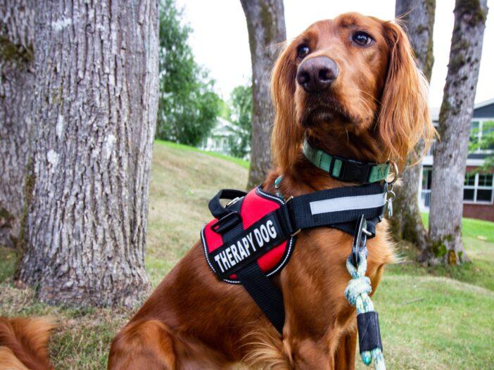 cane adibito a pet-therapy